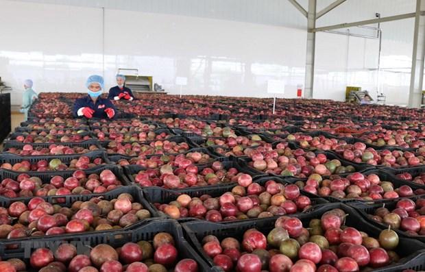 Экспорт фруктов и овощеи в январе сократился hinh anh 1
