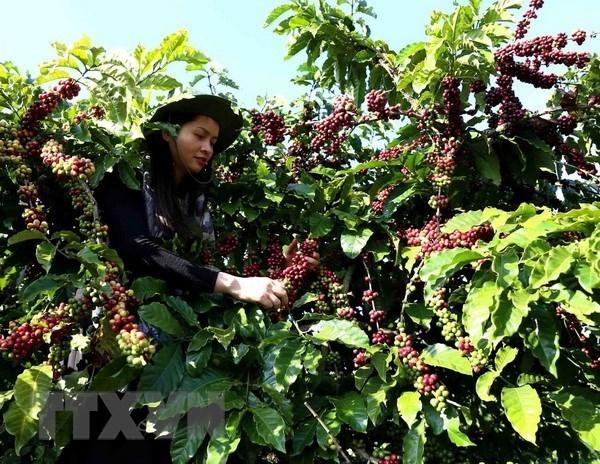 Алжир - потенциальныи рынок для вьетнамских продуктов hinh anh 1