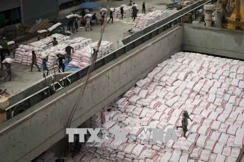 Вьетнам всегда уделяет внимание продовольственнои безопасности наряду с экспортом риса hinh anh 1