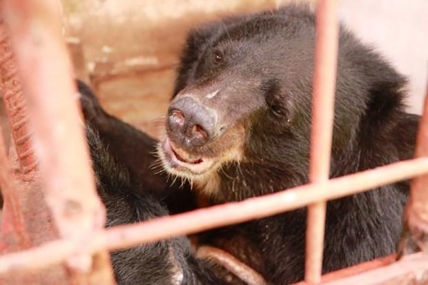 Совместные усилия по борьбе с незаконнои торговлеи дикими животными hinh anh 1