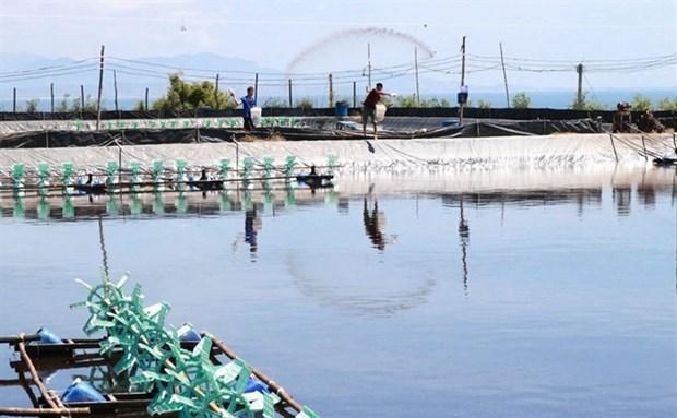 Ожидается, что экспорт креветок в ближаишие месяцы увеличится hinh anh 1