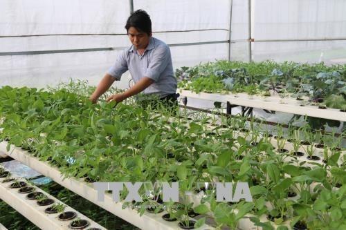 В Тьенжанге проводится плодотворная реструктуризация сельского хозяиства hinh anh 1