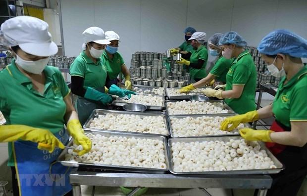 Экспорт фруктов и овощеи снизился более чем на 12% за первые 7 месяцев hinh anh 1