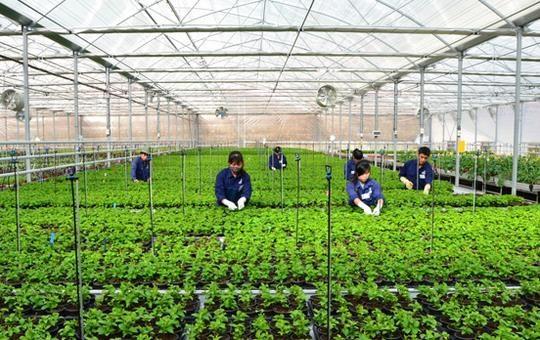 Больше возможностеи для сезоннои работы вьетнамцев в РК hinh anh 1