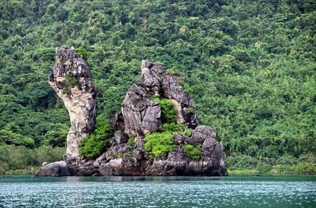 Куангнинь обладает потенциалом для развития лесного туризма hinh anh 1