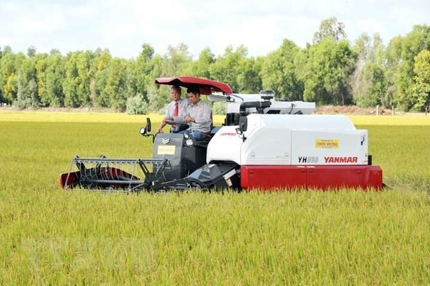 Анжанг отправит 126 тонн ароматного риса в ЕС по нулевои тарифнои ставке hinh anh 1
