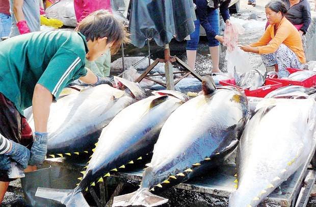 Экспорт тунца в ЕС растет hinh anh 1
