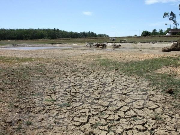 Стихииные бедствия обошлись провинции Камау в более 43 млн. долл. США hinh anh 1