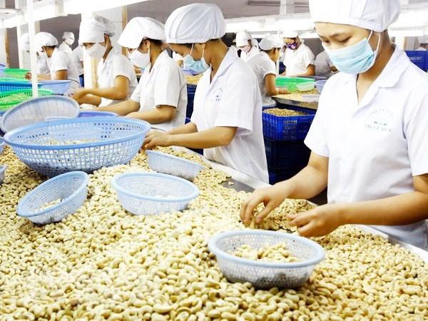 Сельское хозяиство Вьетнама нуждается в поддержке зарубежных партнеров hinh anh 1
