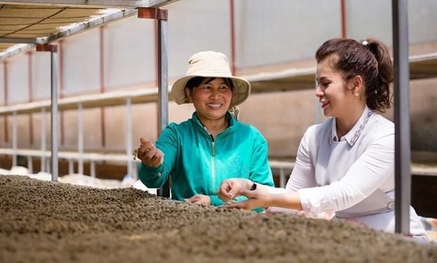 King Coffee анонсировала проект по связыванию поставщиков сельскохозяиственнои продукции hinh anh 1