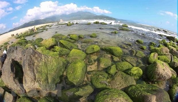 Риф Намо - зеленая жемчужина Дананга hinh anh 1