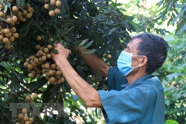 Вьетнамская сельскохозяиственная продукция пользуется популярностью на требовательном рынке ЕС hinh anh 1