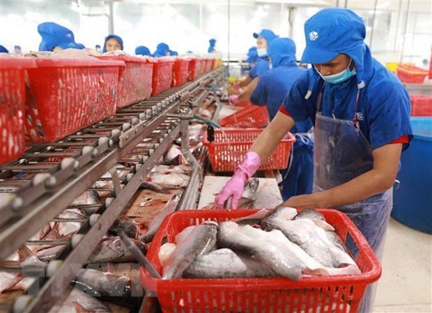 Экспорт рыбнои продукции резко упал из-за социального дистанцирования hinh anh 1