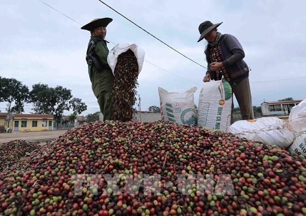 Экспорт кофе из Вьетнама в РК может увеличиться hinh anh 1