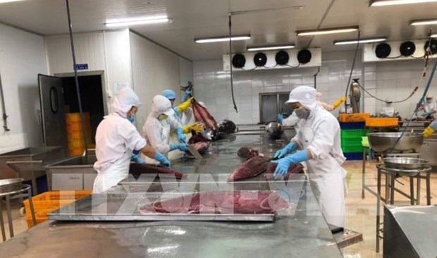 Экспорт тунца из Вьетнама в ЕС резко вырос благодаря EVFTA hinh anh 1